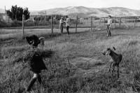 Guppie feeding Danny's goat, El Rito