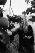 Womand picking fruit, El Rito